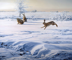 Brown hares in snow print