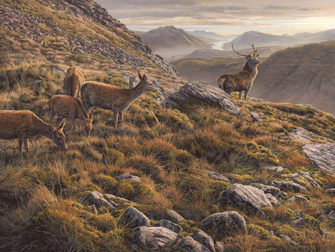 """Glen Etive"" Red Deer Stag & Hinds Print"