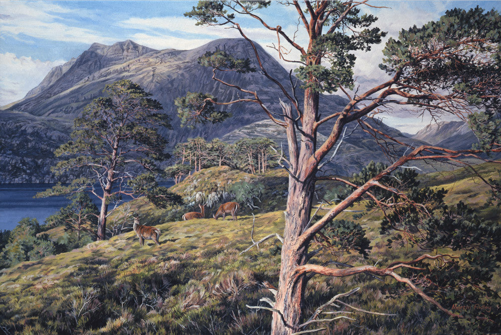 Red deer hinds amongst scots pines with a mountain view of Slioch and Loch Maree