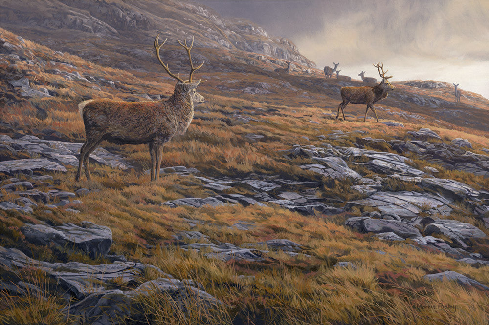 A Picture of Rutting Red Deer Stags Watched by Hinds - Canvas Print