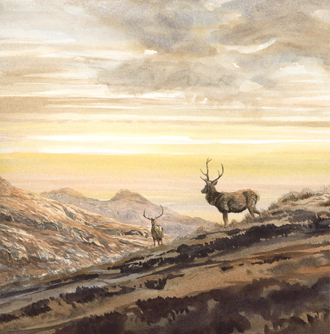 """Golden Evening"" Red Deer Stags Print"