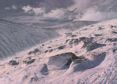 Hunting golden eagle print for sale - Ben Macdui, Cairngorms, Scotland
