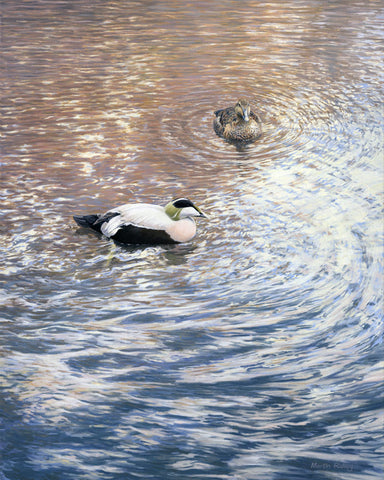 """Eider Duck Pair"" Canvas Print"