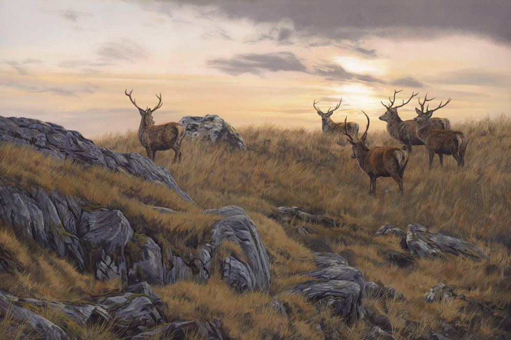 canvas print of red deer stags at sundown
