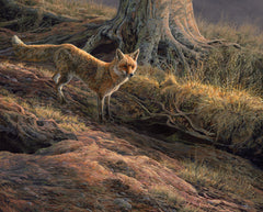 """At the Earth"" Red fox artwork for sale available as a framed print or loose."