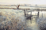 Print of barn owl hovering over frosty grass -  picture by Martin Ridley