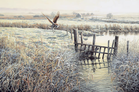 """Frosty Morning"" Barn Owl Print"