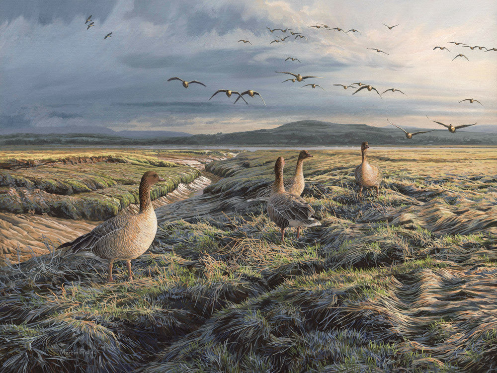 Pink-footed geese flying in to the marsh at Wigtown Bay. Wildfowl art print.