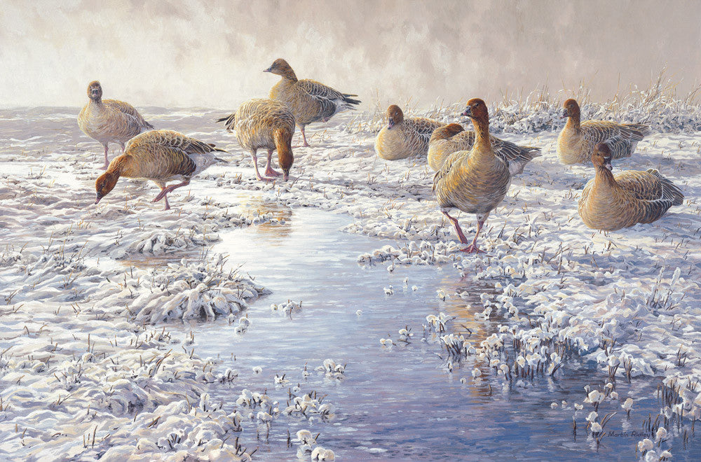 """Frozen Puddle"" Pink-footed Goose Print by Wildfowl Artist Martin Ridley"