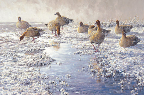 """Frozen Puddle"" Pink-footed Goose Print"