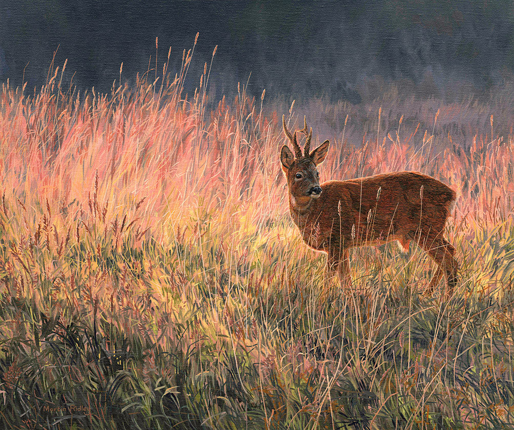 Artwork of roe buck in summer grass