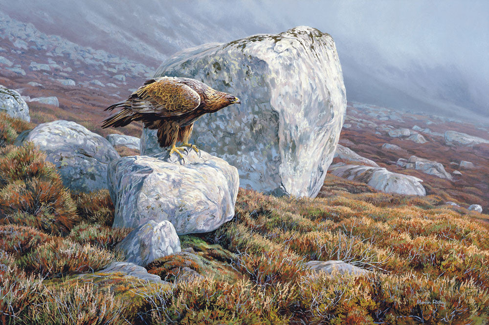 Golden Eagle Picture by Martin Ridley - Limited Edition Print of Bird of Prey