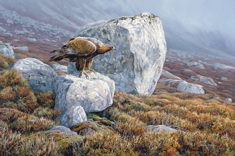 Golden Eagle - Bird of Prey Print