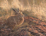 Golden Evening Brown Hare Print
