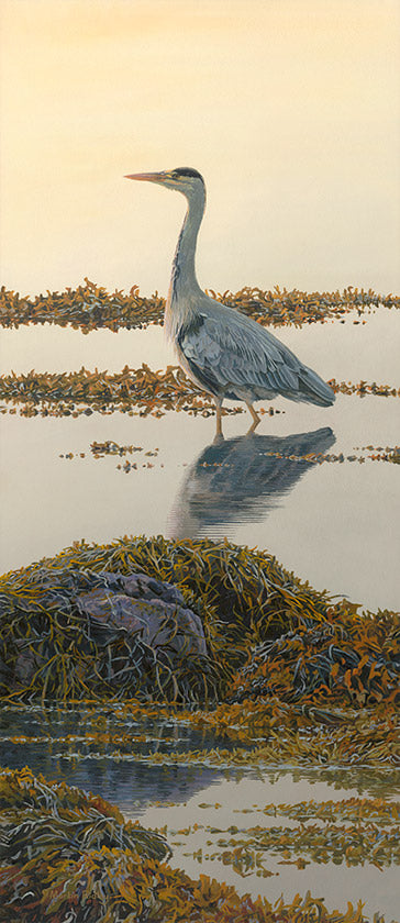 Picture of heron on shoreline at dusk