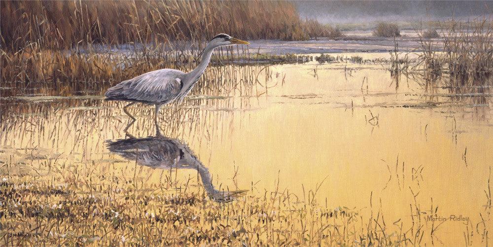Grey heron bird print for sale by Martin Ridley