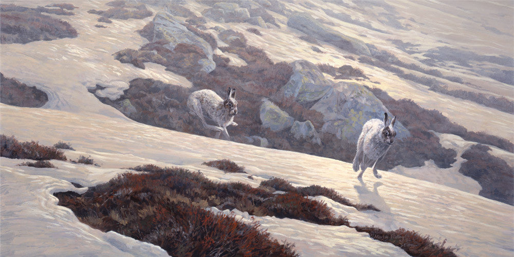 canvas print of chasing mountain hares over snow