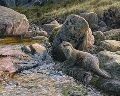 European otter print for sale - Reproduced from original artwork by Martin Ridley