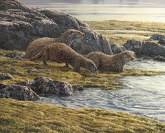 Otters on Loch Spelve Picture