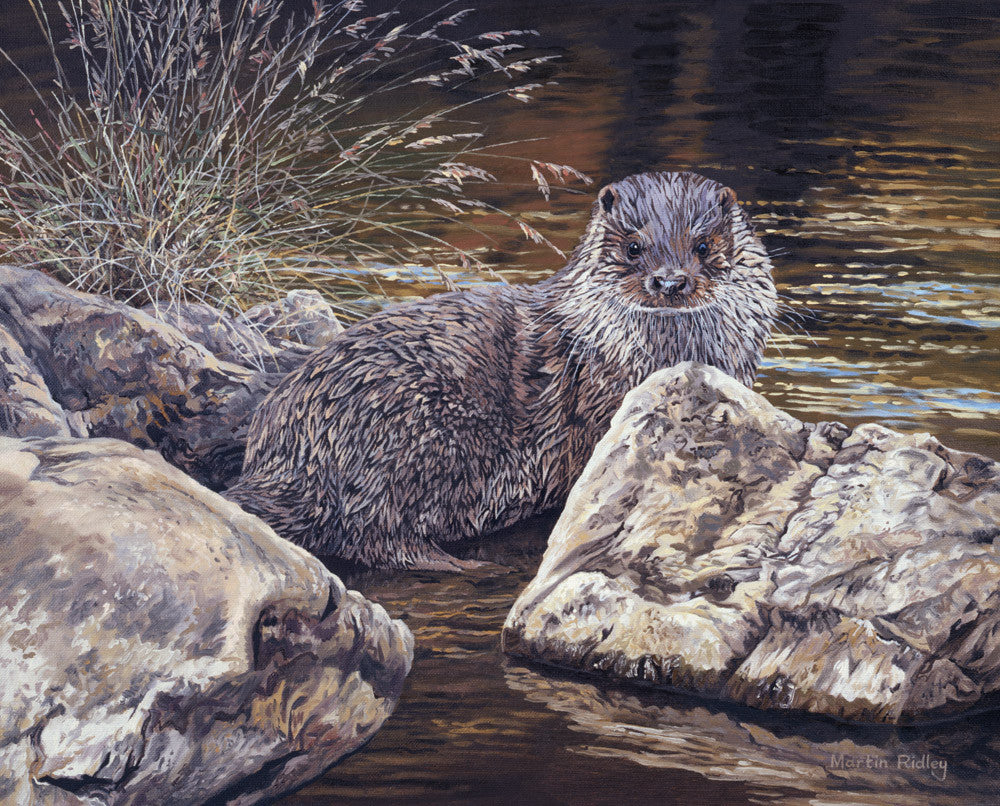Young otter print - from painting by Martin Ridley