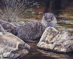Young otter picture - painting by Martin Ridley