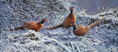 Pheasant trio in snow picture - limited edition gamebird print