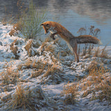 Print of a red fox pouncing into snow covered grass