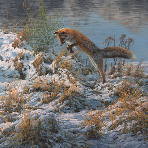 """Pouncing Fox"" Red Fox in Snow"