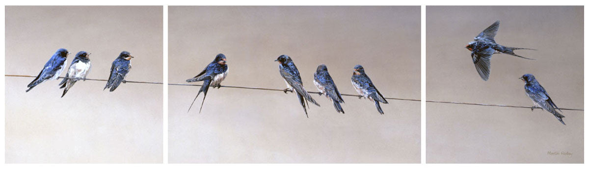 """Gathering Swallows"" Print by Martin Ridley"