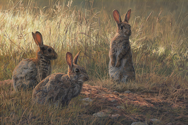 Trio Of Rabbits Print By Wildlife Artist Martin Ridley