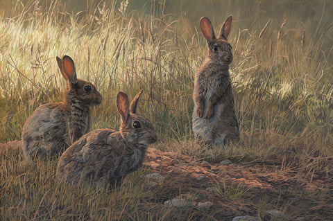"""Trio of Young Rabbits"" Print"