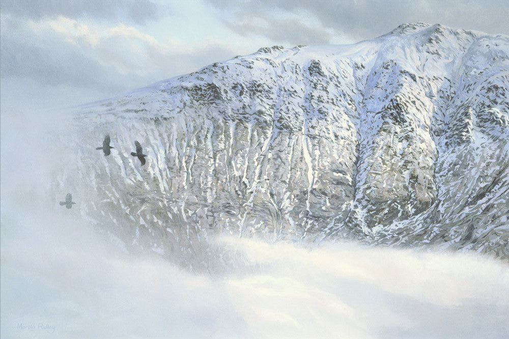 Ravens in winter print - snow covered mountain picture
