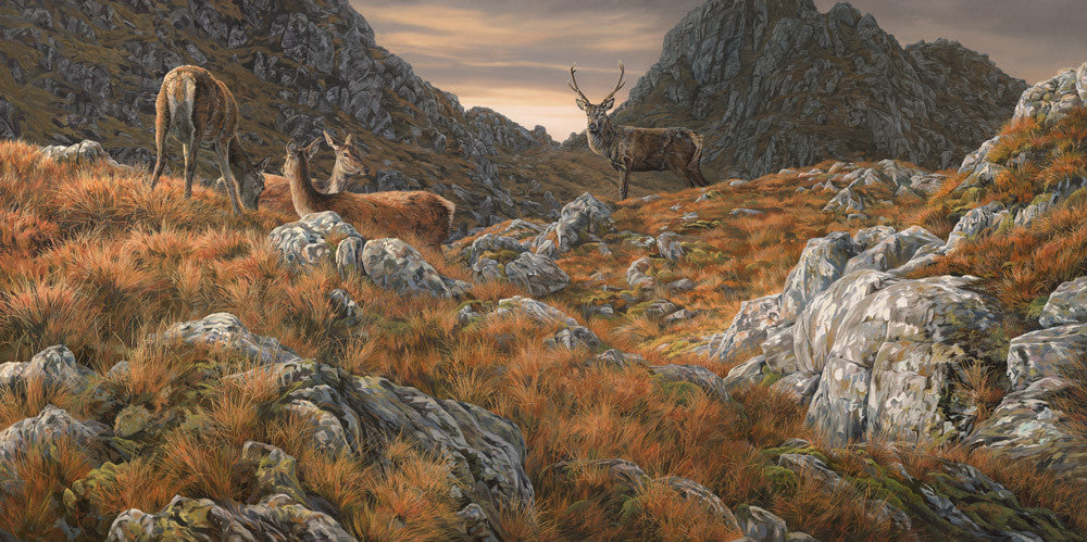 Amongst the Crags, Red Deer Print by Martin Ridley