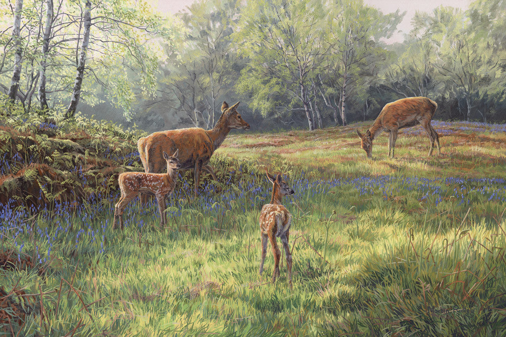Print of red deer hinds and calves