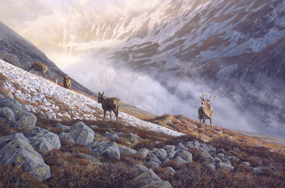 Red deer and mountain screes picture