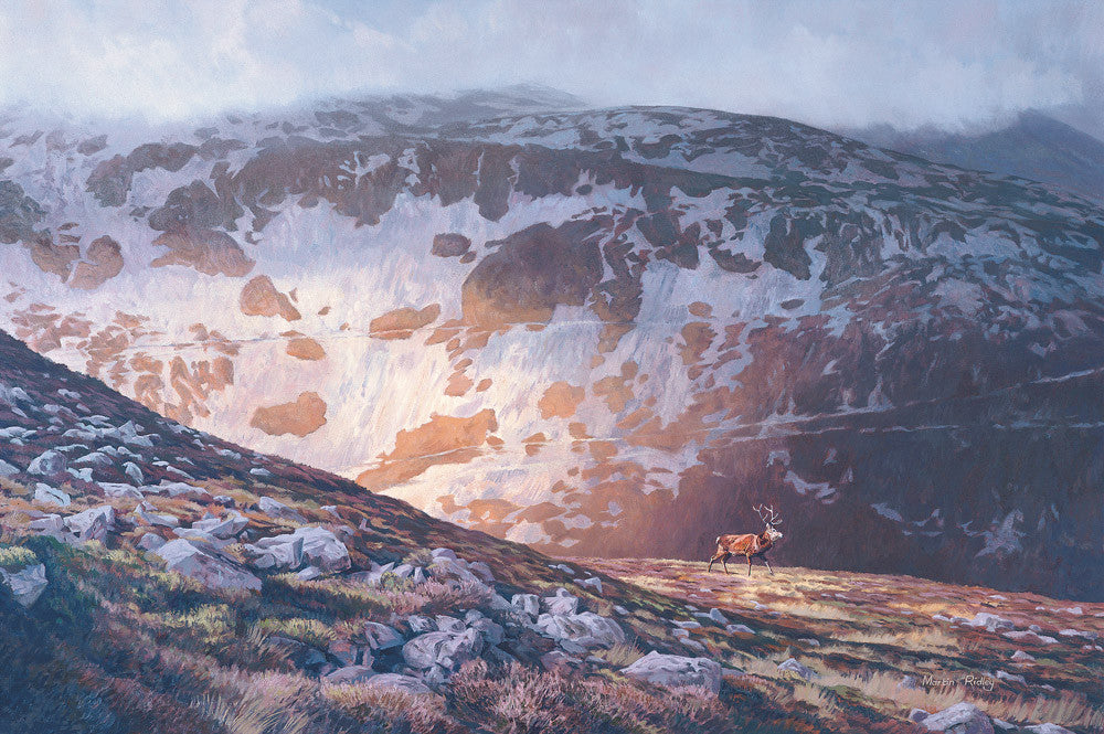 Red deer and scottish mountains print for sale