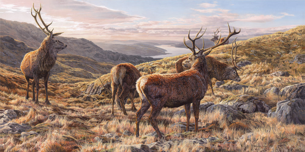 Red stag deer prints Scotland - Reproduced from an original oil painting by Martin Ridley