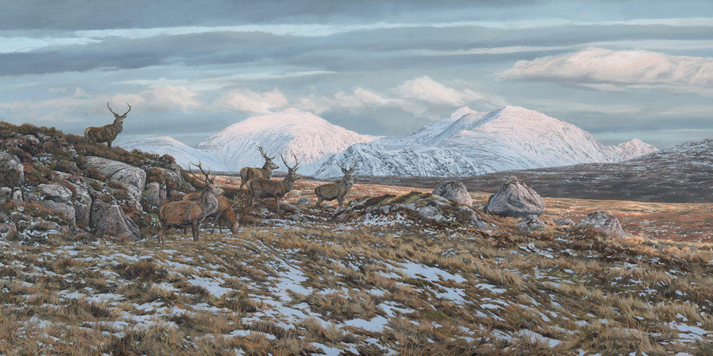 "Red Deer Stags, ""An Teallach"""
