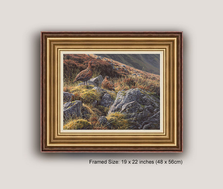 Pair of Red Grouse Print (Optional framing with UK deliveries ...