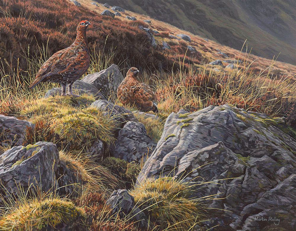 Pair of Red Grouse Print