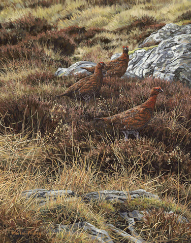 Red Grouse Print