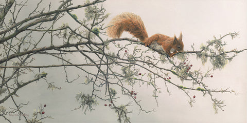 """Out on a Limb"" Red Squirrel Print"