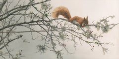 Red squirrel pictures - Wildlife print of a red squirrel by Martin Ridley