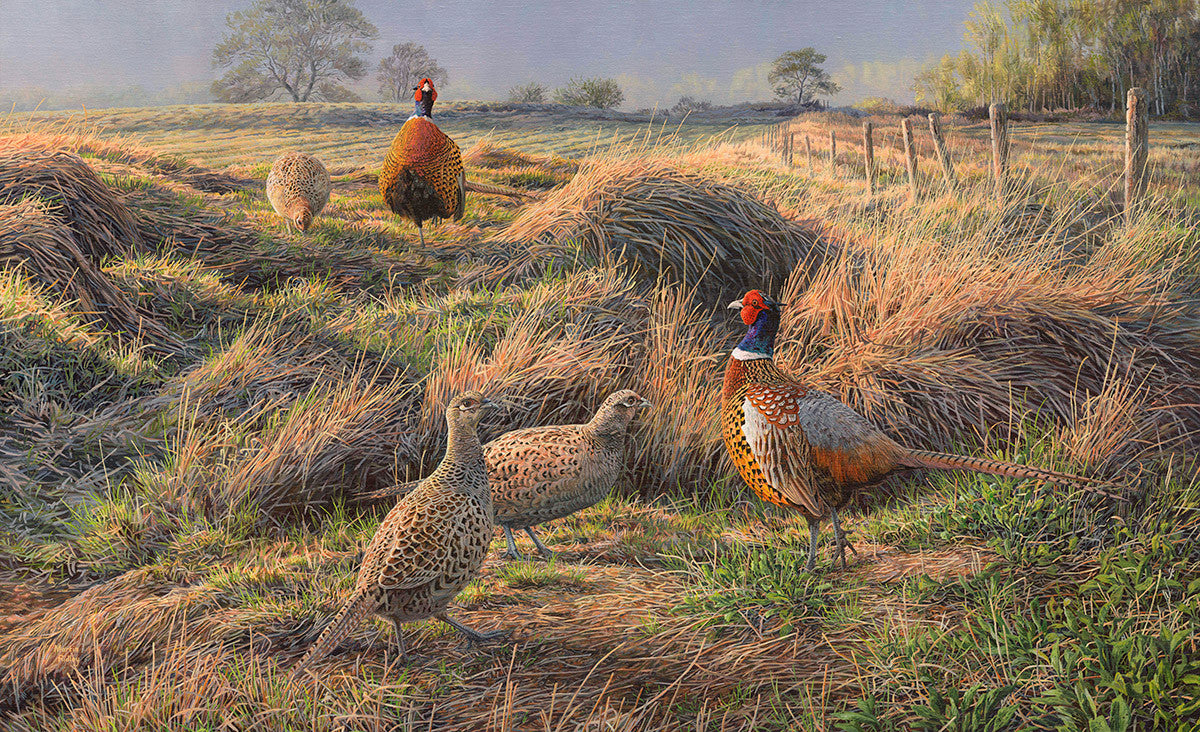 Picture of pheasants in spring time colours