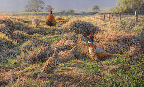 Showtime Pheasants - Print of displaying pheasants in early spring