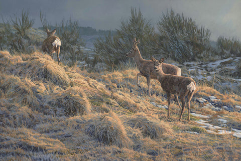 """Trio of Roe Deer"" Print"