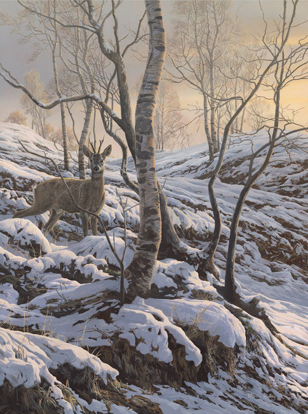 Roe buck print for sale - from a painting by Martin Ridley