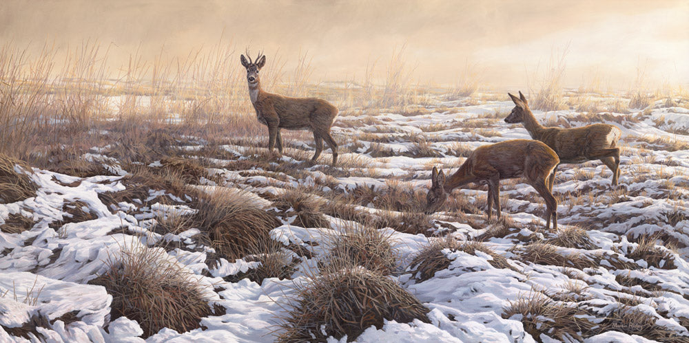 "Roe Deer Print, ""First Snow"""