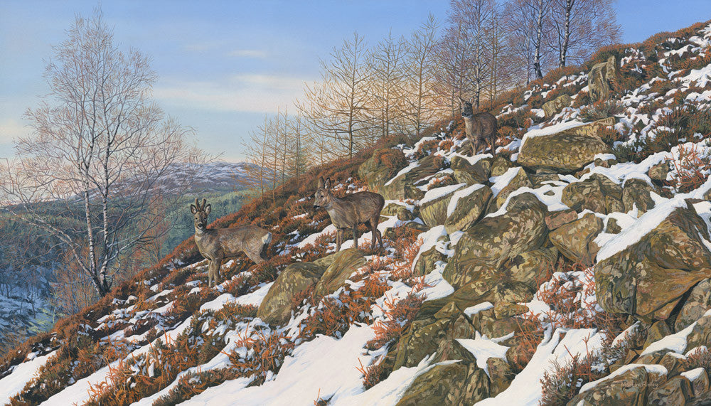 Three roe deer on rocky slope picture