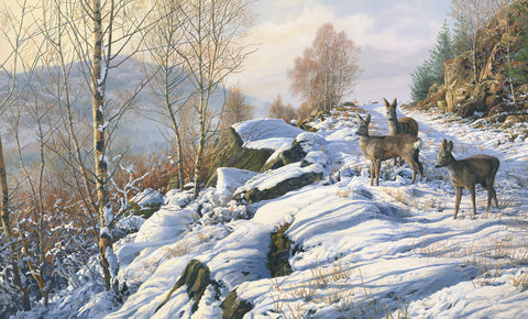 """Winter Track"" Roe Deer Print"